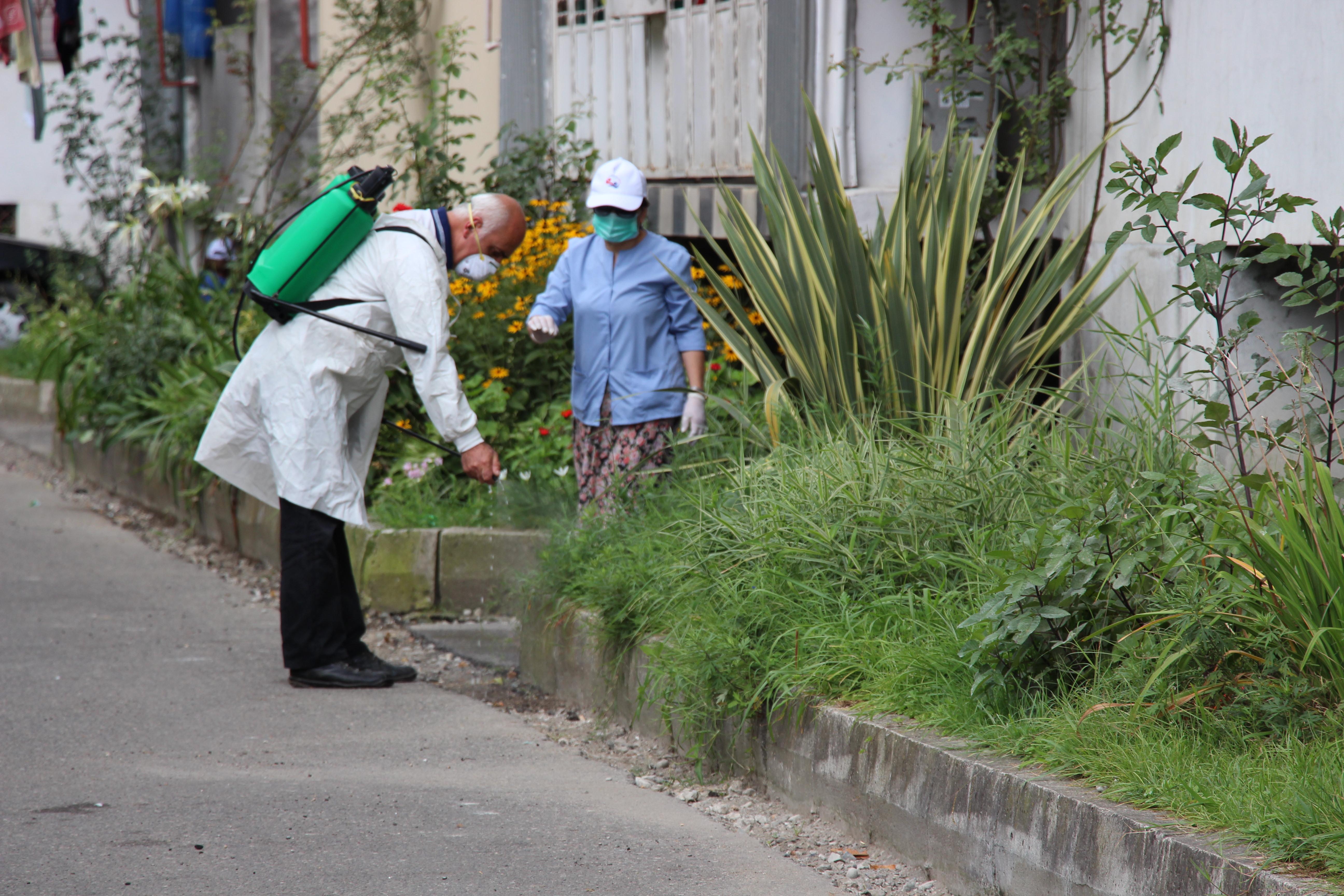 აჭარაში კოღოებისა და დაავადებების გადამტანი სხვა მწერების განადგურება მიმდინარეობს